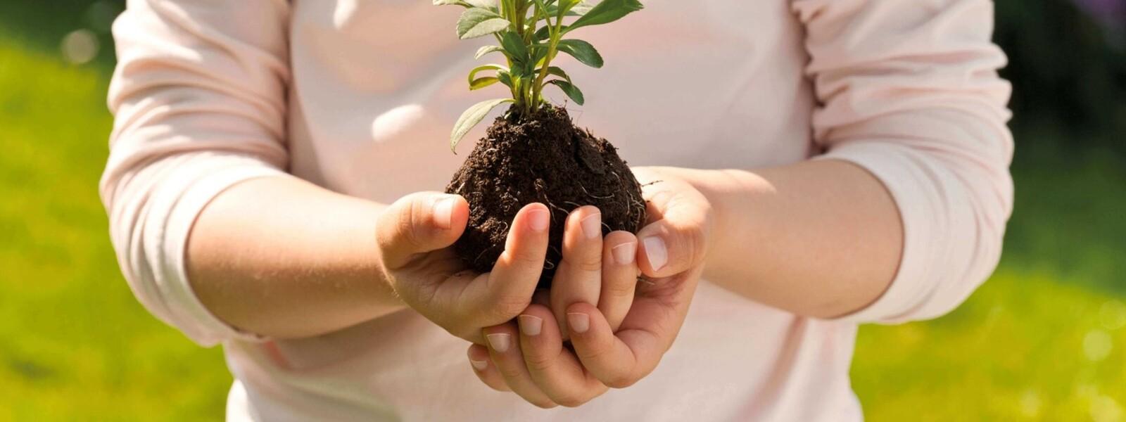 Kinderhände halten Erde mit einer Pflanze